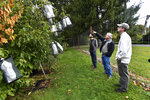 Vernon Coffey, left, William Powell and Andy Newhouse prepare to harvest genetically modified chestnut samples at the State University of New York's College of Environmental Science & Forestry Lafayette Road Experiment Station in Syracuse, N.Y., Monday, Sept. 30, 2019. Powell is co-director of the American Chestnut Research & Restoration Project that has developed an American chestnut tree with a genetically modified resistance to a blight that decimated the trees in the 20th century. (AP Photo/Adrian Kraus)