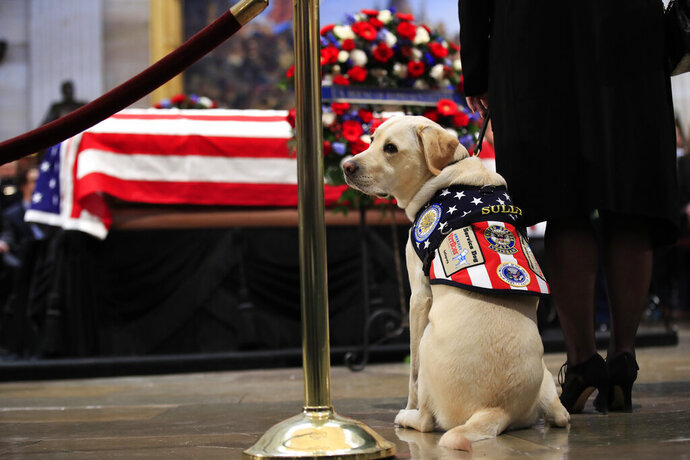 FILE - In this Dec. 4, 2018 file photo, Sully, former President George H.W. Bush's service dog, pays his respect to President Bush as he lies in state at the U.S. Capitol in Washington. A program that trains and places service dogs with disabled military veterans has commissioned a statue of President George H.W. Bush's service dog Sully for the Bush presidential library. America's VetDogs has commissioned sculptor Susan Bahary to create the bronze statue to be placed in the east wing of the Bush library at Texas A&M University. (AP Photo/Manuel Balce Ceneta, File)