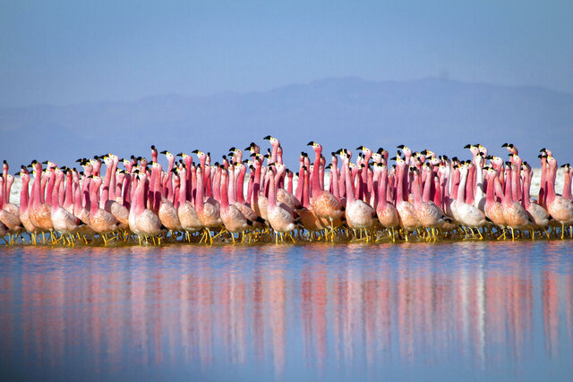 """This image released by BBC Studios/BBC America shows a flamingo colony in the Andes in a scene from  """"Planet Earth: A Celebration."""" The one-hour special pulls together sequences from """"Planet Earth II"""" and """"Blue Planet II"""" with a new narration from David Attenborough and a reworked score by Hans Zimmer and Jacob Shea. It premieres on Monday at 8 p.m. ET/7p.m. CT across BBC AMERICA, AMC, SundanceTV and IFC. (Justin Anderson/BBC Studios/BBC America via AP)"""