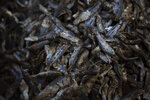 Smoked and processed fish is set in a basket after being cleaned and separated by female workers at a processing site on Bargny beach, some 35 kilometers (22 miles) east of Dakar, Senegal, Sunday April 25, 2021. (AP Photo/Leo Correa)