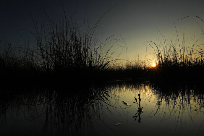 "In this Monday, Oct. 21, 2019 photo, the sun rises behind saw grass in a marsh at Everglades National Park near Flamingo, Fla. ""Here are no lofty peaks seeking the sky, no mighty glaciers or rushing streams wearing away the uplifted land,"" President Harry S. Truman said in a Dec. 6, 1947, address dedicating the Everglades National Park. ""Here is land, tranquil in its quiet beauty, serving not as the source of water, but as the last receiver of it. To its natural abundance we owe the spectacular plant and animal life that distinguishes this place from all others in our country."