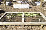 Radishes and carrots are among the edibles which are being grown in Jamie's Garden, Oct. 24, 2019 on the campus of Orangeburg Prep, a garden built in honor of Jameson