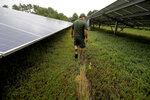 In this Wednesday, Oct. 2, 2019, photo, cranberry grower Mike Paduch walks among solar arrays in a cranberry bog at his farm, in Carver, Mass. Plummeting cranberry prices has America's cranberry industry eyeing a possible new savior: solar power. (AP Photo/Steven Senne)