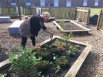 Cathy Smith, a teacher assistant at Orangeburg Preparatory Schools in Orangeburg, South Carolina, tends to a garden box in Jamie's Garden. The garden has fruits and vegetables planted by students and was created in memory of slain 2002 OP graduate Jameson
