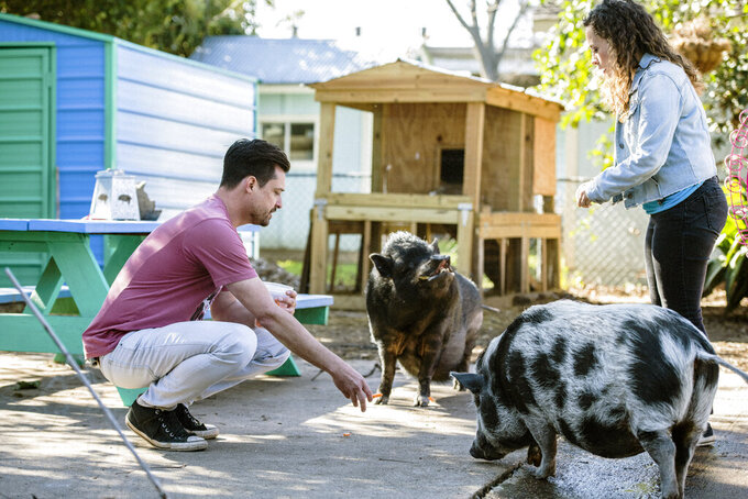 """This image released by CBS All Access shows Dan Illescas, left, and Tracey Stabile of the Central Texas Pig Rescue in a scene from the CBS All Access docuseries """"That Animal Rescue Show."""" (Danny Matson/CBS All Access via AP)"""