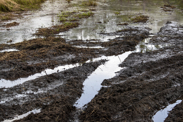 This March 11, 2020, photo shows deep, muddy ruts were the result of illegal off-roading in a fragile wetland environment in Ocala National Forest, Fla.  (Patrick Connolly/Orlando Sentinel via AP)