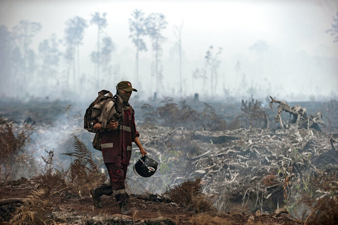 A fire fighter walks on a field as smoke billows from burnt trees at Sebangau National Park, Central Kalimantan, Indonesia, Thursday, Sept .19, 2019. Indonesia's forest fires are an annual problem that strains relations with neighboring countries. The smoke from the fires has blanketed parts of Indonesia, Singapore, Malaysia and southern Thailand in a noxious haze. (AP Photo/Fauzy Chaniago)