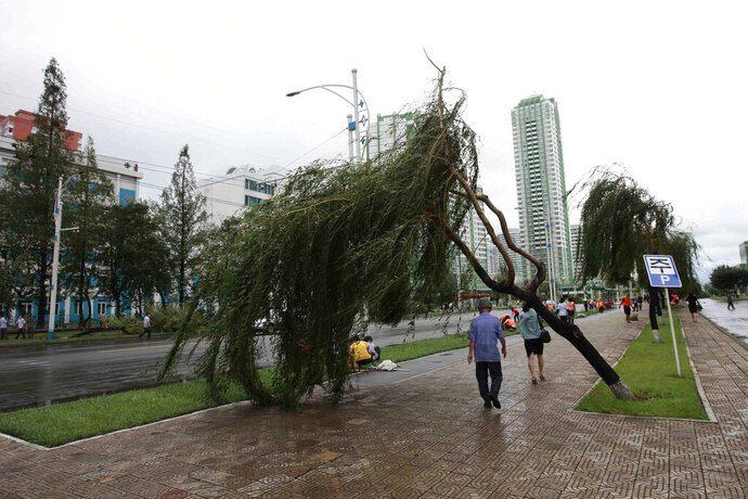 People walk under a damaged tree from a typhoon on a main road in Pyongyang, North Korea, Thursday, Aug. 27, 2020. A typhoon damaged homes and other buildings, flooded roads and toppled utility poles on the Korean Peninsula before weakening to a tropical storm. (AP Photo/Cha Song Ho)