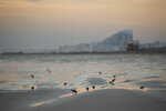 In this Jan. 23, 2020 photo, shorebirds forage for food along a beach in Wildwood, N.J. that is in the district Democrat-turned-Republican Rep. Jeff Van Drew represents.  President Donald Trump is coming next week to the Jersey shore to reward newly minted Republican Rep. Jeff Van Drew for leaving the Democrats and opposing impeachment and is expected to attract a crowd and headlines. But Van Drew has also been crisscrossing the district to secure support from local GOP  that he spent years fighting. (AP Photo/Matt Slocum)
