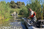 In this photo taken Sept. 12, 2019, Sean McCain, a scientist with the California Department of Fish and Wildlife, cuts a sweet potato on a kayak in a pond as a bait for nutria in Stevinson, Calif. With $10 million in state funding, the Department of Fish and Wildlife is preparing to deploy new tactics in its efforts to eradicate nutria. (AP Photo/Terry Chea)