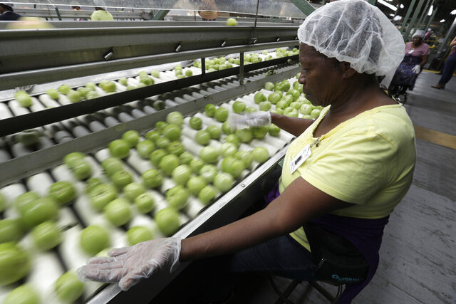 In this, Wednesday, Feb. 5, 2020 photo a worker sorts through tomatoes after they are washed before being inspected and packed, in Florida City, Fla. A Florida bill mandating that private companies verify each new hire's eligibility to work in the U.S. is worrying farmers in the agriculture-rich state. The growers complain they are struggling to find farm workers as the unemployment rate reaches record lows. (AP Photo/Wilfredo Lee)