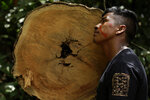 Tenetehara Indigenous man Ota Ka 'Apor, of the Ka'Azar, or Forest Owners, leans against a tree felled by illegal loggers, as the group patrols their lands on the Alto Rio Guama reserve in Para state, near the city of Paragominas, Brazil, Tuesday, Sept. 8, 2020. Three Tenetehara Indigenous villages are patrolling to guard against illegal logging, gold mining, ranching, and farming as increasing encroachment and lax government enforcement during COVID-19 have forced the tribe to take matters into their own hands. (AP Photo/Eraldo Peres)
