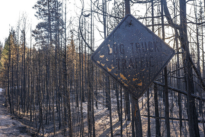 A fire-damaged sign hangs near trees burned by the Bootleg Fire on Wednesday, July 21, 2021 in Bly, Ore. (AP Photo/Nathan Howard)