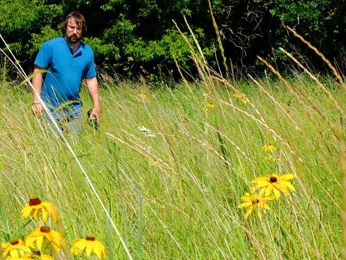 In a Tuesday, July 16, 2019 photo, Anthony Cortilet, supervisor at the Minnesota Department of Agriculture's Noxious and Invasive Weed Program, looks for the invasive plant Palmer amaranth in a Douglas County, Minn. (Dan Gunderson/Minnesota Public Radio via AP)