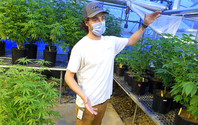 Mitch Westmoreland talks about the hemp research that he is working on at Utah State University on Tuesday, July 28, 2020 in Logan, Utah.  Ninety years ago, hemp researchers at Utah State University grew cannabis for rope and had no way to test the THC content in crops other than smoking it and monitoring the effects. Research halted in 1970 when then-President Richard Nixon signed the Controlled Substances Act. Now that it's legal to grow once more USU researchers are back at it — only this time, they're using technology and testing to determine the optimal ways to grow the plant for high yield and cannabinoid content, and what that means for Utah growers. (Eli Lucero/The Herald Journal via AP)