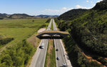 An eco-corridor for the endangered Golden Lion Tamarin crosses over an interstate highway in Silva Jardim, Rio de Janeiro state, Brazil, Thursday, Aug. 6, 2020. Once recently planted trees grow on the bridge, it will allow the primates to safely cross the busy highway bisecting one of the last Atlantic coast rainforest reserves. (AP Photo/Mario Lobao)