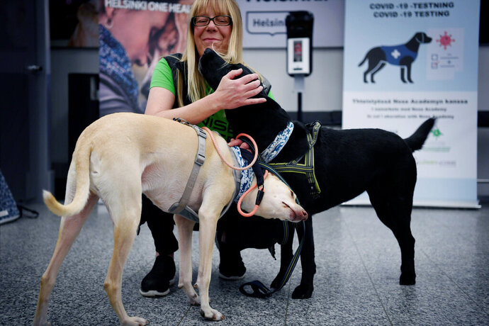Sniffer dogs named K'ssi, left and Miina react with trainer Susanna Paavilainen at the Helsinki airport in Vantaa, Finland, Tuesday, Sept. 22, 2020. Four corona sniffer dogs are trained to detect the Covid-19 virus from the arriving passengers samples at the airport.  (Antti Aimo-Koivisto/Lehtikuva via AP)