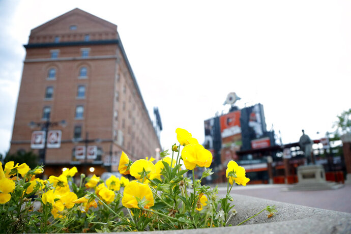 In a photo taken Saturday, June 27, 2020, a flowerbed is seen outside the Oriole Park at Camden Yards stadium in Baltimore. With the baseball season starting amidst coronavirus restrictions limiting fans from attending games, tall structures such as the hotels and nearby buildings will offer a bird's eye view of games at some stadiums around the country. (AP Photo/Julio Cortez)