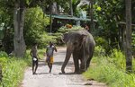 A Sri Lankan mahout Nishanth, wearing cap, walks with a tame elephant Suddi, who was recently released from government custody following a court order, in Pannipitiya, a suburb of Colombo, Sri Lanka, Sunday, Sept. 12, 2021. Environmentalists in Sri Lanka are challenging a court order issued earlier this month that would allow the return of 14 illegally captured wild elephants to people accused of buying them from traffickers. Rights groups and lawyers say the Sept. 6 court order is based on a government decree that violates Sri Lankan environmental laws. Elephants are revered because they have been an essential part of religious and cultural festivals in Sri Lanka for many centuries. (AP Photo/Eranga Jayawardena)