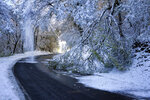 Snow falls from trees on the road in Poleymieux au Mont d'Or, near Lyon, central France, Friday, Nov. 15, 2019. A dump of heavy snow in southern France has brought down power lines and trees, killing one person, and caused widespread traffic disruption. (AP Photo/Laurent Cipriani)