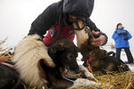 In this Monday, March 11, 2019 photo, musher Lance Mackey greets his dogs after arriving in Unalakleet, Alaska, during the Iditarod Trail Sled Dog Race. (Marc Lester/Anchorage Daily News via AP)