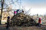 Children climb  around a large ponderosa pine that fell in Cannon Hill Park after a windstorm passed the area on Wednesday, Jan. 13, 2021 in  A powerful wind storm has rolled through the Pacific Northwest left a trail of damage. (Colin Mulvany/The Spokesman-Review via AP)