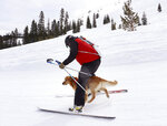 Ski patrol dog Buster, runs between the legs of ski patroller Andrew Pinkham at Sugar Bowl Resort in Norden, Calif. on March 17, 2021. Rescue dogs at Lake Tahoe ski resorts receive specialized training to rescue people from avalanches in Nevada and California. They're trained to detect human scents, find buried clothes and rescue people sunk 10 to 12 feet (3 to 3.7 meters) in the snow. (Jason Bean/The Reno Gazette-Journal via AP)