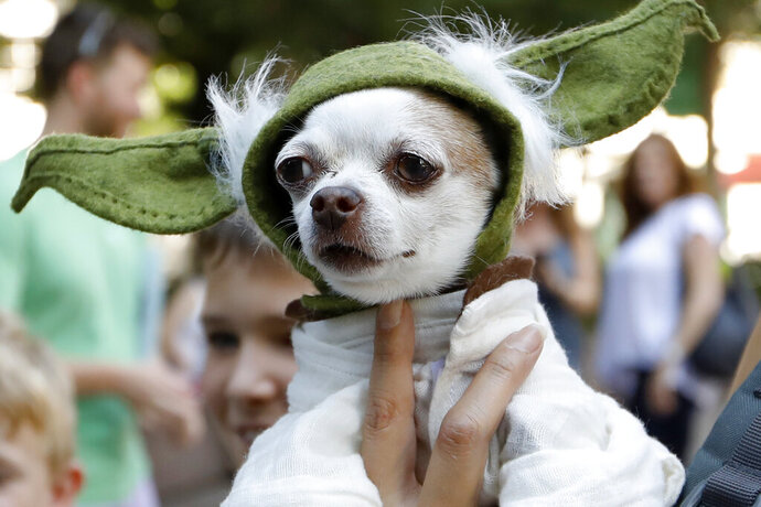 A dog dressed as Yoda from