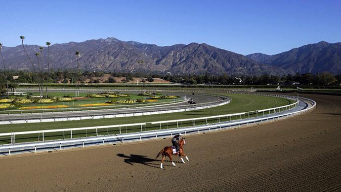 FILE - In this Oct. 30, 2013 file photo, an exercise rider takes a horse for a workout at Santa Anita Park with palm trees and the San Gabriel Mountains as a backdrop in Arcadia, Calif. A person with direct knowledge of the situation says a 21st horse has died at Santa Anita. The person spoke to The Associated Press on the condition of anonymity Tuesday, March 5, 2019, because the fatality has not been announced publicly. A total of 21 horses have died since the race track's winter meet began on Dec. 26. (AP Photo/Jae C. Hong, File)