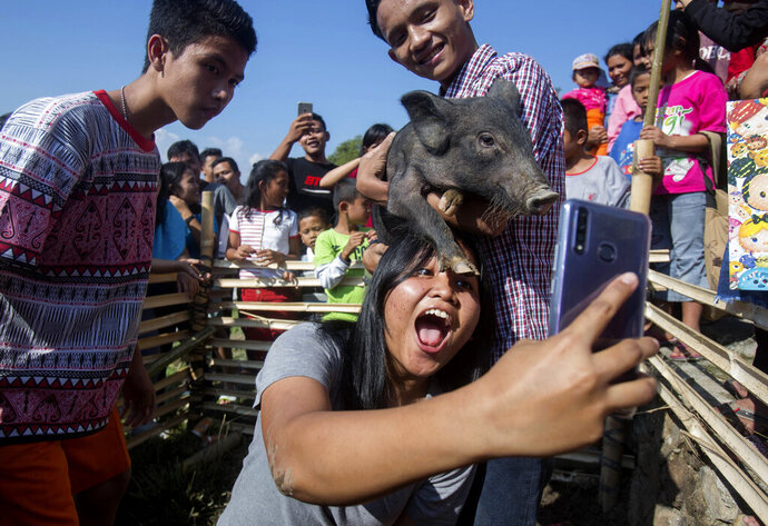 In this Friday, Oct. 25, 2019, photo, a visitor takes a selfie with a pig during Toba Pig and Pork Festival, in Muara, North Sumatra, Indonesia. Christian residents in Muslim-majority Indonesia's remote Lake Toba region have launched a new festival celebrating pigs that they say is a response to efforts to promote halal tourism in the area. The festival features competitions in barbecuing, pig calling and pig catching as well as live music and other entertainment that organizers say are parts of the culture of the community that lives in the area. (AP Photo/Binsar Bakkara)