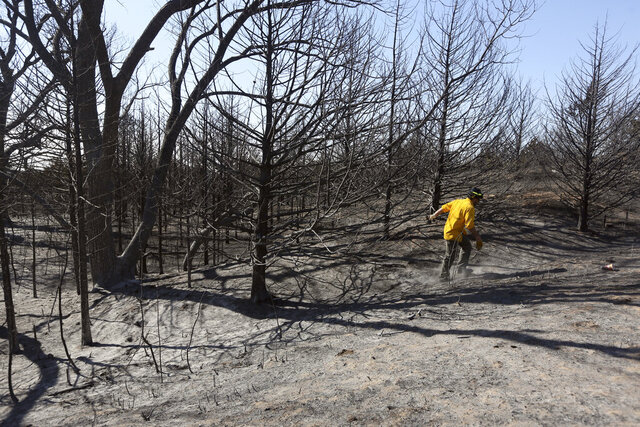 FILE - In this March 6, 2017, file photo firefighter Travis Pohlman checks for hot spots in the trees in the Highlands in Hutchinson, Kan. A University of Nebraska study indicates that trees in Kansas are posing a mounting wildfire risk as they continue to take over grassland around the state. Initial research suggests a link between the spread of trees in the Great Plains and a rise in the size and frequency of large wildfires. (Lindsey Bauman/The Hutchinson News via AP, File)
