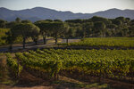 FILE - In this Oct. 10, 2019, the Chateau des Bertrands vineyard is pictured after a recent harvest in Le Cannet-des-Maures, in the Provence region. Winemakers near the French Riviera are taking stock of the damage after a wildfire blazed through a once picturesque nature reserve near the French Riviera. The blaze left two people dead, more than 20 injured and forced some 10,000 people to be evacuated.  (AP Photo/Daniel Cole, file)
