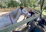 This photo taken Sept. 25, 2019, shows Chris Reder, of DTOM/22 Ranch, right, talking about how he uses Max, a therapy horse, left, to work with Veterans. (John Davis/Aberdeen American News via AP) **NOT AN AP PHOTO MEMBER**