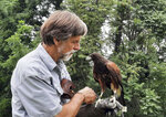 """Jack Hubley works with a Harris's Hawk named Super at """"The Falconry Experience,"""" July 8, 2021, in Hershey, Pa. Falconry is a sport where a hunter partners with a bird of prey such as a hawk to pursue game animals such as squirrels and rabbits in Pennsylvania. It's not something just anyone can do. It's highly regulated, and there are many requirements to care for a bird of prey, which can include eagles. (Brian Whipkey/Daily American via AP)"""
