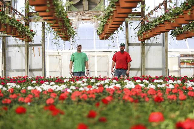 Bothers Mark, left and Tim Ott stand together with Geraniums at Cleveland Ott & Son in Collegeville, a wholesale nursery that sells its flowers and plants to smaller garden centers in the region, most of whom are closed. Tuesday, March 24, 2020.