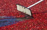 FILE- In this Oct. 11, 2016, file photo, a worker uses a paddle to move cranberries floating in a bog during harvesting on a farm in Ilwaco, Wash. The European Union will start taxing on Friday a range of imports from the U.S., including quintessentially American goods like Harley-Davidson bikes and cranberries, in response to President Donald Trump's decision to slap tariffs on European steel and aluminum. (AP Photo/Ted S. Warren, File)
