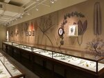 This Oct. 8, 2019 photo shows one wall of the Glass Flowers exhibit at the Harvard Museum of Natural History in Cambridge, Mass. The glass flowers date back to the 19th and early 20th centuries, and were intended to dazzle the public while educating botany students. They have been on display continuously at Harvard since 1893. This third-floor gallery at the Harvard Museum of Natural History is one of the institution's most beloved _ and most visited _ treasures. (Tracee Herbaugh via AP)