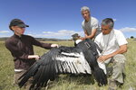 In this Jan. 24, 2013, photo provided by provided by Ugo Mellone, researchers Emily Shepard, left, and Sergio Lambertucci and technician Orlando Mastrantuoni, right, hold an Andean condor that is going to be released after GPS-DD tagging efforts in the Patagonian steppe of Argentina. A new study sheds light on just how efficiently the world's largest soaring bird rides air currents to stay aloft for hours without flapping. The Andean condor has a wingspan stretching to 10 feet and weighs up to 33 pounds, making it the heaviest soaring bird alive today. (Ugo Mellone via AP)