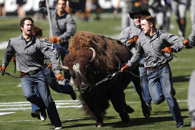 Handlers lead Ralphie, mascot of Colorado, down the field with the team in pursuit during the ceremonial run onto the field before an NCAA college football game against New Hampshire Saturday, Sept. 15, 2018, in Boulder, Colo. (AP Photo/David Zalubowski)