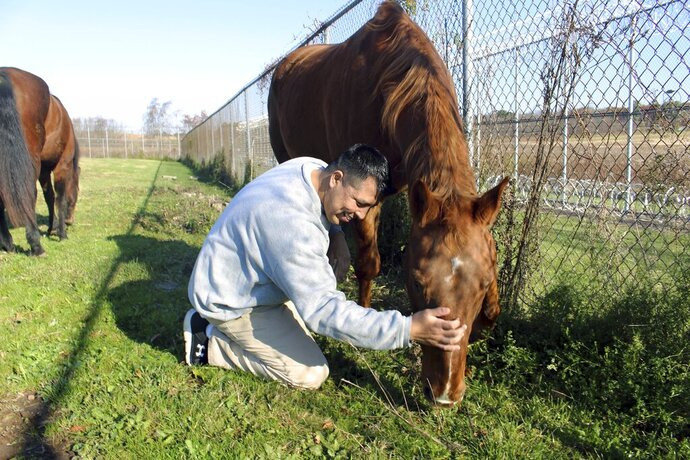 Inmate Daniel Elliot interacts with a horse named Hank on Wednesday, Nov. 6, 2019, as part of an equine-assisted psychotherapy program offered to military veterans inside the Willard-Cybulski Correctional Institution in Enfield, Conn. (AP Photo/Pat Eaton-Robb)