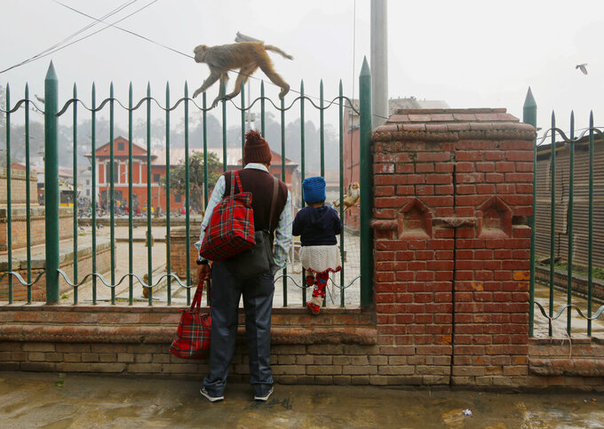 A man and a child watch monkeys at the Pashupatinath temple premises in Kathmandu, Nepal, Tuesday, Feb. 19, 2019. Monkeys abound in the area around the temple premise. (AP Photo/Niranjan Shrestha)