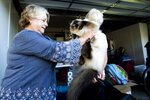 Sandy Beddow evacuates with her cat as a wildfire called the Kincade Fire burns nearby on Saturday, Oct. 26, 2019, in Healdsburg, Calif. Authorities issued evacuation orders for the town Saturday morning as the region braces for predicted strong, dry winds Saturday evening. (AP Photo/Noah Berger)