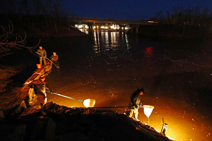 In this Thursday, April 16, 2020 photo, eel fishermen use dip nets while fishing by lantern light in Yarmouth, Maine. The need to exercise social distancing while fishing is a change for elver fishermen, who sometimes line the most productive rivers and streams in the state cheek by jowl at the height of the season, which runs to early June. (AP Photo/Robert F. Bukaty, File)