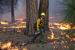 In this June 11, 2019 photo, firefighter Andrew Pettit walks among the flames during a prescribed fire in Cedar Grove at Kings Canyon National Park, Calif. The prescribed burn, a low-intensity, closely managed fire, was intended to clear out undergrowth and protect the heart of Kings Canyon National Park from a future threatening wildfire. The tactic is considered one of the best ways to prevent the kind of catastrophic destruction that has become common, but its use falls woefully short of goals in the West. (AP Photo/Brian Melley)