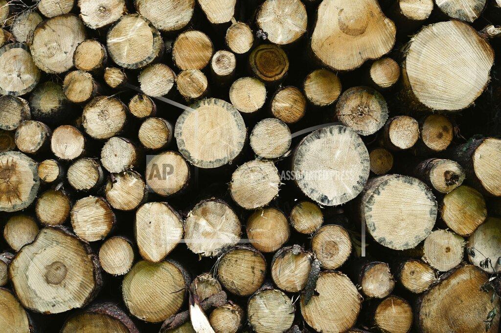 Cut down trees