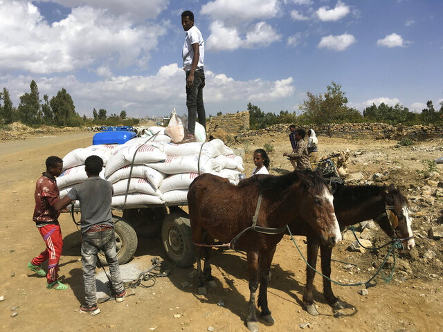 "In this Tuesday Jan. 12, 2021 photo provided by the Catholic Relief Services, people affected by the conflict in Tigray load food aid provided by USAID and Catholic Relief Services onto a donkey cart to be tansported to their home, outside Mekele, Ethiopia. From ""emaciated"" refugees to crops burned on the brink of harvest, starvation threatens the survivors of more than two months of fighting in Ethiopia's Tigray region. Authorities say more than 4.5 million people, or nearly the entire population, need emergency food. The first humanitarian workers to arrive after weeks of pleading with Ethiopia for access describe weakened children dying from diarrhea after drinking from rivers, and shops that were looted or depleted weeks ago. (Catholic Relief Services via AP)"