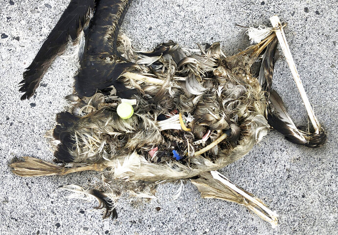 In this Oct. 22, 2019, photo, plastic sits in the decomposed carcass of a seabird on Midway Atoll in the Northwestern Hawaiian Islands. In one of the most remote places on Earth, Midway Atoll is a wildlife sanctuary that should be a safe haven for seabirds and other marine animals. Instead, creatures here struggle to survive as their bellies fill with plastic from faraway places. (AP Photo/Caleb Jones)