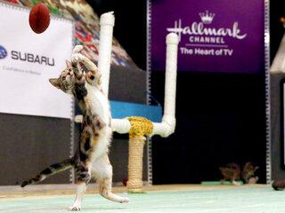 Hallmark-Kitten Summer Games