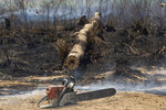A rancher's chainsaw sits idle next to a felled tree in an area consumed by fire near Novo Progresso, Para state, Brazil, Tuesday, Aug. 18, 2020. A man who did not identify himself blamed a neighbor for starting the blaze, but did not name the person or file a complaint. Agents saw a chainsaw on the ground and the man took it away, without answering whether he had a license for it, as required by Brazilian law. Records show no investigation was opened, no fines were issued. (AP Photo/Andre Penner)