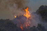 Flames engulf a trees in Cugliari, near Oristano, on the island of Sardinia, Italy, Monday, July 26, 2021. Fires raged Sunday on Italy's Mediterranean island of Sardinia, where nearly 400 people were evacuated overnight. No deaths or injuries have been reported. Firefighters said several homes were damaged in the island's western interior region. (Alessandro Tocco/LaPresse via AP)